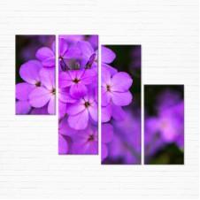 Модульная картина - Фиолетовый Флокс