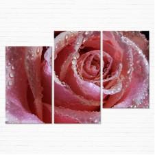 Модульная картина - Розовая Роза