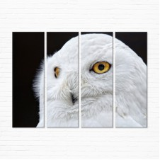 Модульная картина - Белая Сова
